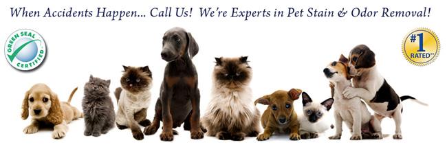 Pet Odour Removal Services Vancouver