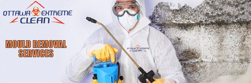 Mould removal Kitchener Waterloo Ontario