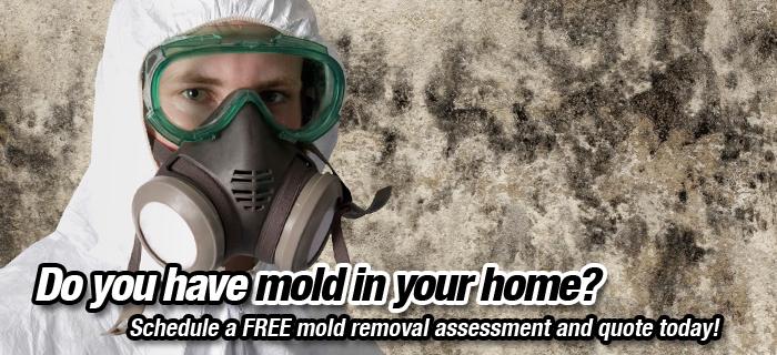 Mould inspection services, Vancouver