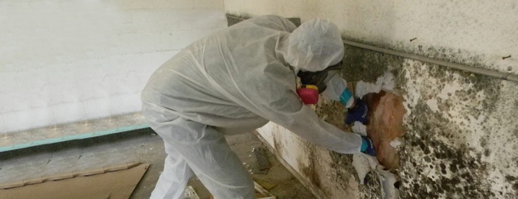 Removal of Mould in Basement kitcher - waterloo